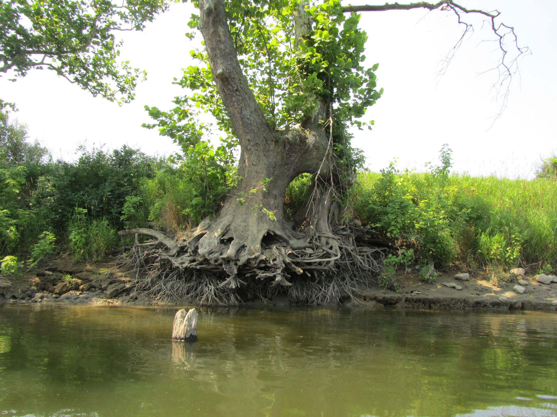 ripps-bayou